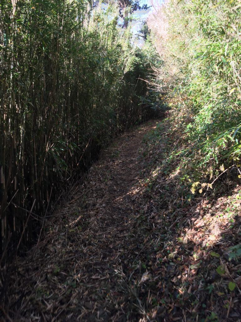 箱根外輪山 笹のトンネル多数